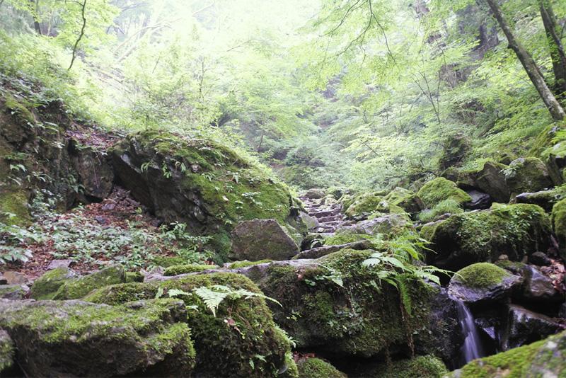 【御岳山】ロックガーデン山歩き。ゆっくり歩くと見えてくる「小さな世界」