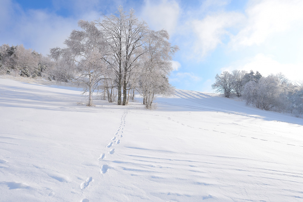 冬の登山にはアイゼンが必要不可欠。アイゼンの種類と選び方