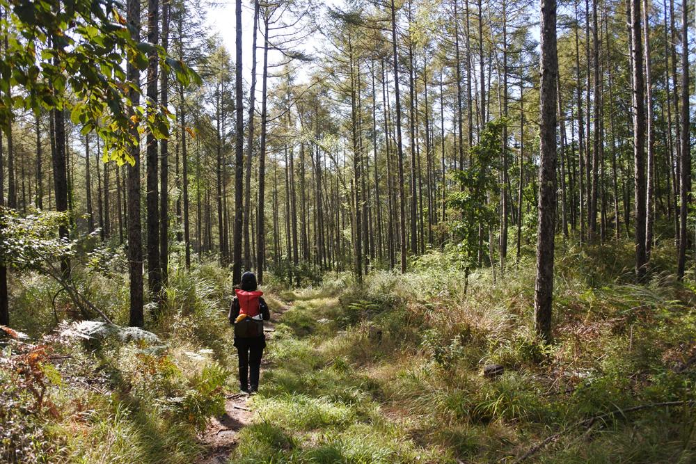 ひとりでハイキングに行くのが不安。安全にハイキングを楽しむための基礎知識