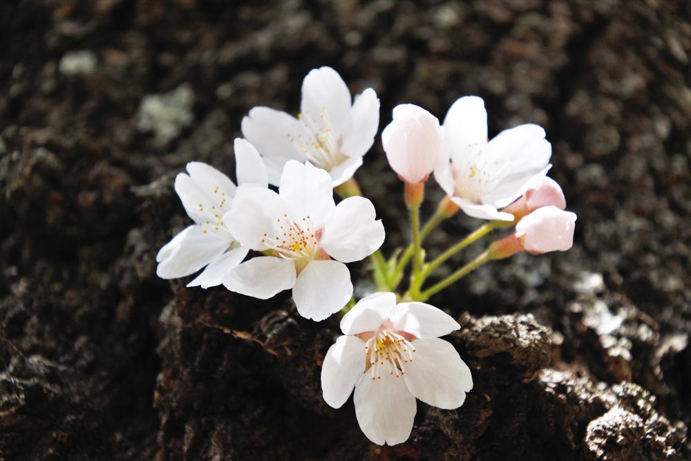春から登山を始めてみたい!春山の魅力と都内にある初心者におすすめの山