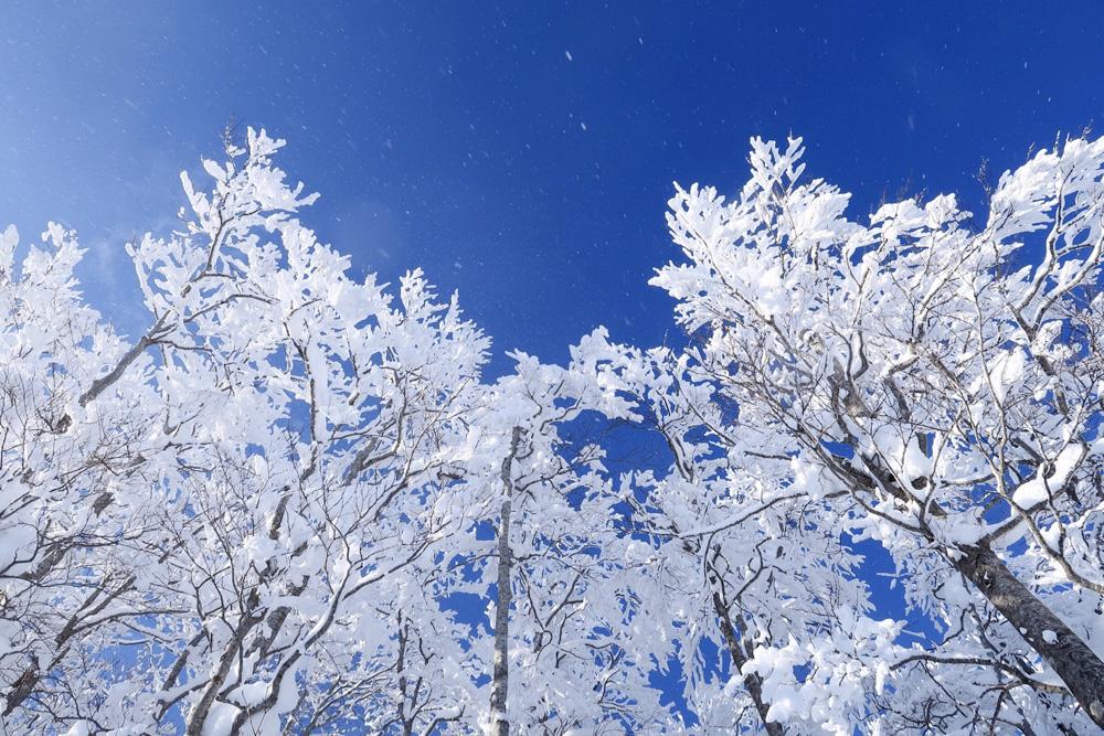 登山は季節ごとに変化する。春夏秋冬の魅力を知り日本の自然を味わう!