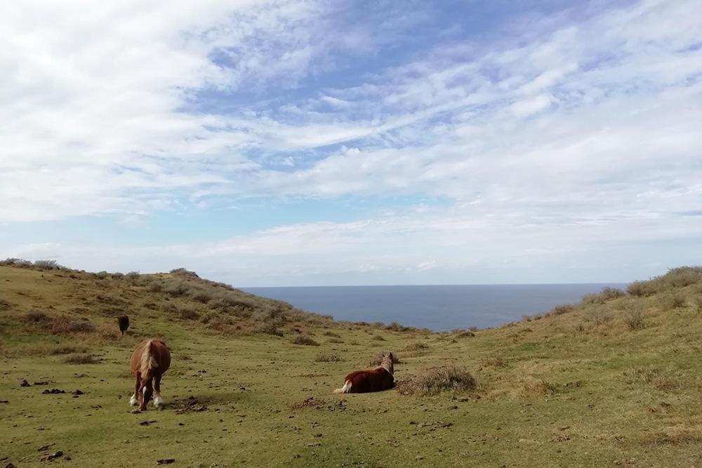 隠岐諸島の絶景をさがしに西ノ島の天空の道を歩く